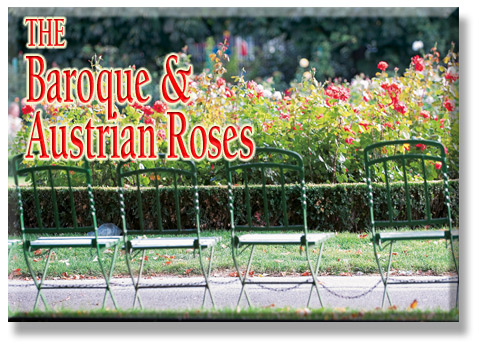 The Baroque & Austrian Roses